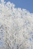 Eis und Bäume Lizenzfreies Stockbild