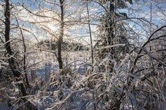 Eis und Schnee umfassten Winter-Baumaste Lizenzfreies Stockfoto
