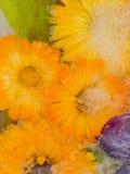 Eisabstraktion von orange Ringelblumenblumen Lizenzfreie Stockfotografie