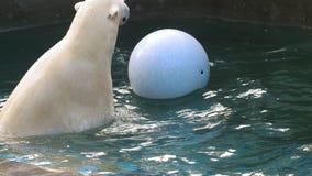 Eisbär, der im Wasser spielt stock video
