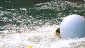Eisbär, der im Wasser spielt stock footage