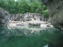 Eisbär, der nahe bei einem Teich sitzt Stockfoto