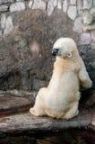 Eisbär, der seinen Hals ausdehnt Stockfoto