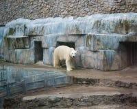 Eisbär in einem Zoo Lizenzfreie Stockfotografie
