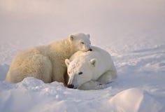 Eisbär mit ihrem Jungen stockfoto