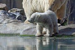 Eisbär mit Jungem Lizenzfreie Stockbilder