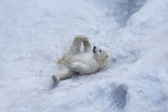Eisbär mit Jungem Mutter und Kind, die Spaß haben Stockfotografie