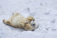 Eisbär mit Jungem Mutter und Kind, die Spaß haben Lizenzfreie Stockfotos