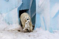 Eisbär mit Jungem Mutter und Kind, die Spaß haben Stockbilder