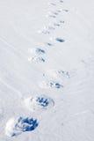 Eisbär-Spuren stockfotografie