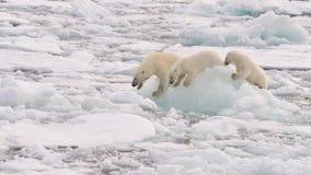 Eisbär und Junge Lizenzfreies Stockbild