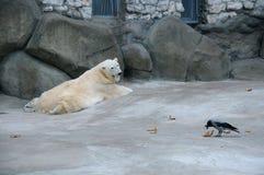 Eisbär und Krähe Stockfotos