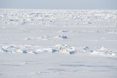 Eisbären, die auf das Eis gehen Lizenzfreie Stockfotos