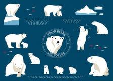Eisbären eingestellt Stockbild
