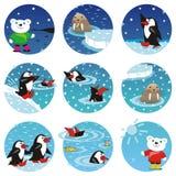 Eisbären, Pinguine, Robbe Stockfoto