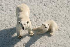 Eisbärmutter und -junges Stockbild
