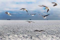 Eisblöcke gefrorenes Meer und Seemöwen Stockfoto