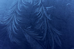 Eisblumen Lizenzfreies Stockbild