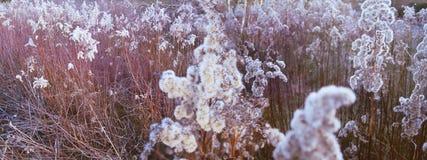 Eisblumen in den Schilfen Stockfotos