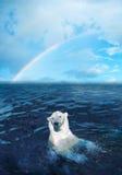 Eisbär Lizenzfreies Stockfoto