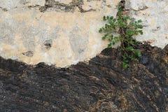 Eisen-Felsenbeschaffenheit Stockbilder