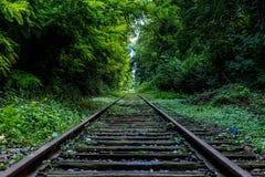 Eisenbahn mit Natur und dem Aufpassen Stockbilder
