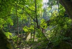 Eisenbahnbrücke im Wald in Lillafured Lizenzfreie Stockfotografie