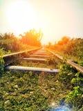 Eisenbahnliniesonnenhimmelanlagen stockfotografie