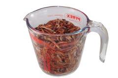Eisenia在glas的天然肥料蠕虫 免版税库存照片