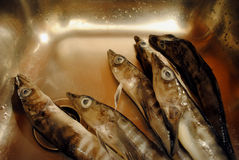 Eisfische in der nicht rostenden Wanne Lizenzfreies Stockfoto