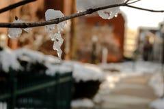 Eisig auf dem Baum Stockbilder