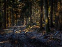 Eisig Wintertag lizenzfreie stockfotografie