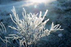 Eisige Anlage, die im Sonnenlicht badet stockbilder