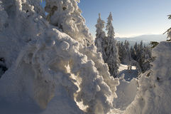 Eisige Bäume Lizenzfreie Stockfotografie