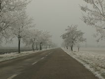 Eisige Bäume Lizenzfreie Stockfotos