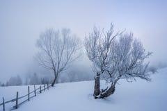 Eisige Bäume Lizenzfreie Stockbilder