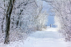 Eisige Bäume Stockfotografie