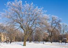 Eisige Bäume in der Stadt am sonnigen Wintertag lizenzfreie stockbilder