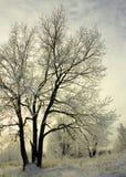 Eisige Bäume im Winter Lizenzfreies Stockbild