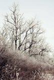 Eisige Bäume und Büsche Stockbilder