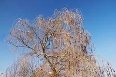 Eisige Baumaste eines Trauerweidebaums in der Stadt parken Lizenzfreies Stockbild
