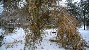 Eisige Baumaste verbogen unter Gewicht Eis stock video