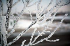 Eisige Baumzweige Stockbilder