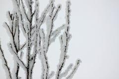Eisige Baumzweige Stockbild