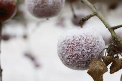 Eisige bedeckte Äpfel im Freien Stockfoto