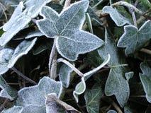 Eisige Blätter Stockbild