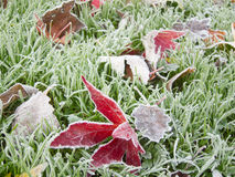 Eisige Blätter Stockfotografie