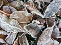 Eisige Blätter lizenzfreie stockbilder