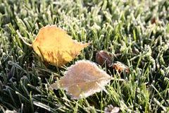 Eisige Blätter des ersten Morgens Stockfotos