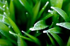 Eisige Blätter des Grases Lizenzfreies Stockbild